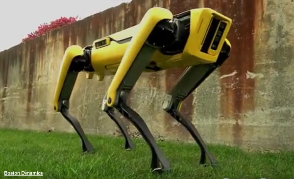 Cane robot della Boston Dynamics